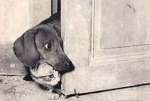 Dachshunds / Dachshunds: the most clever dogs in the world.  Seriously.