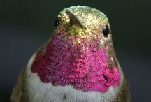 Hummingbird / A humming bird, literally. / by Tab Paterson