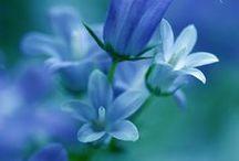 True Blue pt.2 ~ Flowers & Co. / flowers also look good in blue!