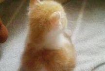 małe kotki