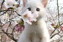 koty kwiaty