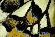 SCD Patterns/Texture