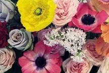 SCD Mood // roses