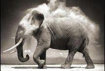 Elephant Gun / by Talita Komatsubara