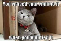 Funny Memes / Imagine what your pet is really thinking when he or she makes that funny expression!  This board dares to do just that. / by Natural Balance Pet Foods