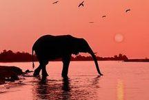 Elephants for kim