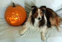 Halloween Fan Photos / Our furry fans in their Halloween best! / by Natural Balance Pet Foods