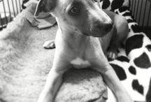 Dog / by Chantal