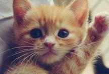 Kitty_Cats
