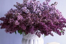 Lavender & Lilac / by Constance R.