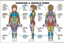 Anatomy of Fitness / by Michael Gilstrap