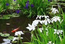 KOI and Elegant Water Features / IMAGINE WALKING ALONG AND TO YOUR SURPRISE YOU HEAR THE SOUND OF WATER.....YOU SEE THE ROCKS AND THE GORGEOUS SURROUND ONLY TO DISCOVER A KOI POND....YOU MUST SMILE....... / by Annie Guthrie