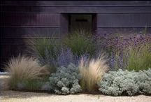 Outside / Plants, curb appeal, landscape / by Vanessa Skiles