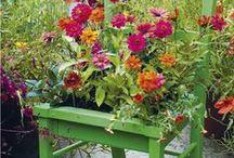 Garden and gardening / Gardening inspirations.