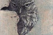 wildlife - original drawings by Yelena Shabrova / by Yelena Shabrova