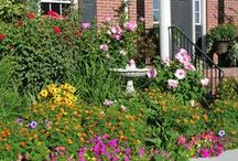 How Does Your Garden Grow / Gardening Tips, Tricks, and Ideas / by Rachael Nichol