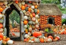 pumpkins and autumn colors