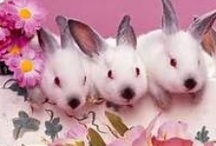 Favorite Easter Images