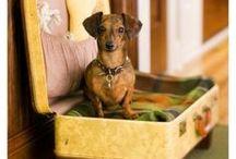 Doggie crafts / by Janae Duarte