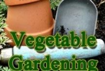Vegetable Garden / Everything related to vegetable gardens