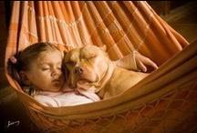 Most misunderstood breed. LOVE THEM.  / by Jennifer ⚓️ Lewis