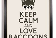 I ♥ Raccoons! / Raccoons are so adorable! ♥