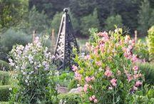 My Secret Garden / Gardens, container gardens, garden paths, herb gardens.
