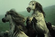 HORSE ~N~ ROUND
