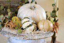 Seasonal Decor Fall / by Kathy Parsons