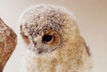 Creature Feature {Animals} / Lots of cute and fuzzy animals.