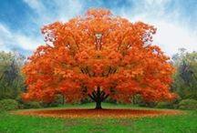 Orange = Happiness / by Maren Michelle