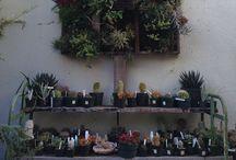 Garden / by M E L A C I N E M O O N