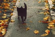 Fall / by M E L A C I N E M O O N