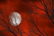 Red! / by Jill Moosekian