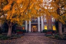Autumn Colors / by Jill Moosekian