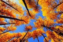 Crunchy Leaves & A Chilly Breeze / Falling in love with fall / by Ariana Hunkin