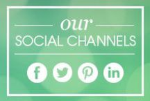 9 Lives Social Channels / Follow 9 Lives throughout the social media realm!