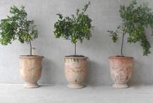 botanical / by Ginny Branch Stelling