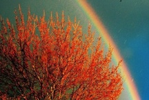 Rainbows... / by Vikki Dolphin