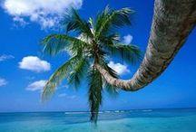 palm tree / Beautiful palm trees.