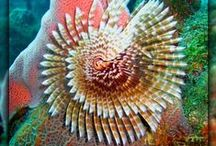 marine worm / Marine worm species are so varied. Different to what you expect.