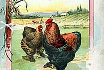 Birds-Chickens, Ducks / Images for chickens, ducks and farm fowl / by Dona Deam