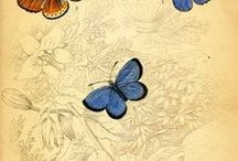 Butterfiles & Moths / Images of butterflies and Moths / by Dona Deam
