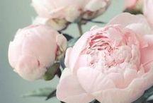 |Fleur|