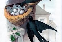 Birds-Nests, Houses & Cages / Interesting bird abode / by Dona Deam