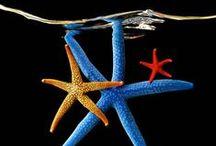 starfish / Different species of starfish