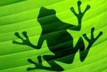 frog, toad, salamander, newt, caecilian / Frogs from all over the world.