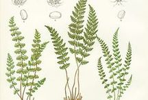 Botanical-Ferns & Mushrooms / Images for ferns and mushrooms for crafting / by Dona Deam