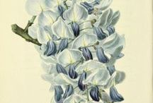 Botanical 2 / Images of flower to use in crafts / by Dona Deam