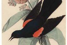 Birds 3 / by Dona Deam